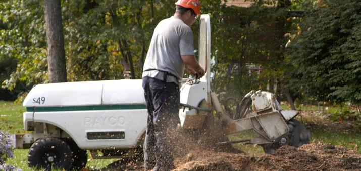 Greenlight Tree Service